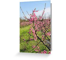 plant of peach Greeting Card