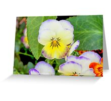 violet in the garden Greeting Card