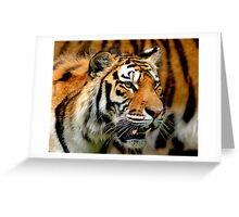 Only Tiger Greeting Card