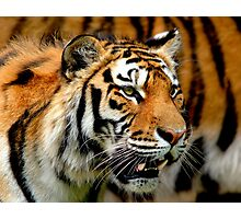 Only Tiger Photographic Print