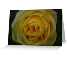 Dewey Rose Greeting Card