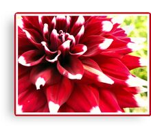 White tipped Canvas Print