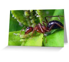 An Ant Getting his Reward From and Aphid     (read description) Greeting Card