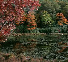 Autumn Reflections by Stephen Vecchiotti