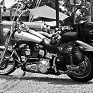 Harley Davidson 100th Anniversary  by Daniel  Oyvetsky
