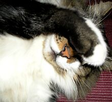 """Cut the Flash, I'm Trin' ta Catnap!"" by Ann  Warrenton"