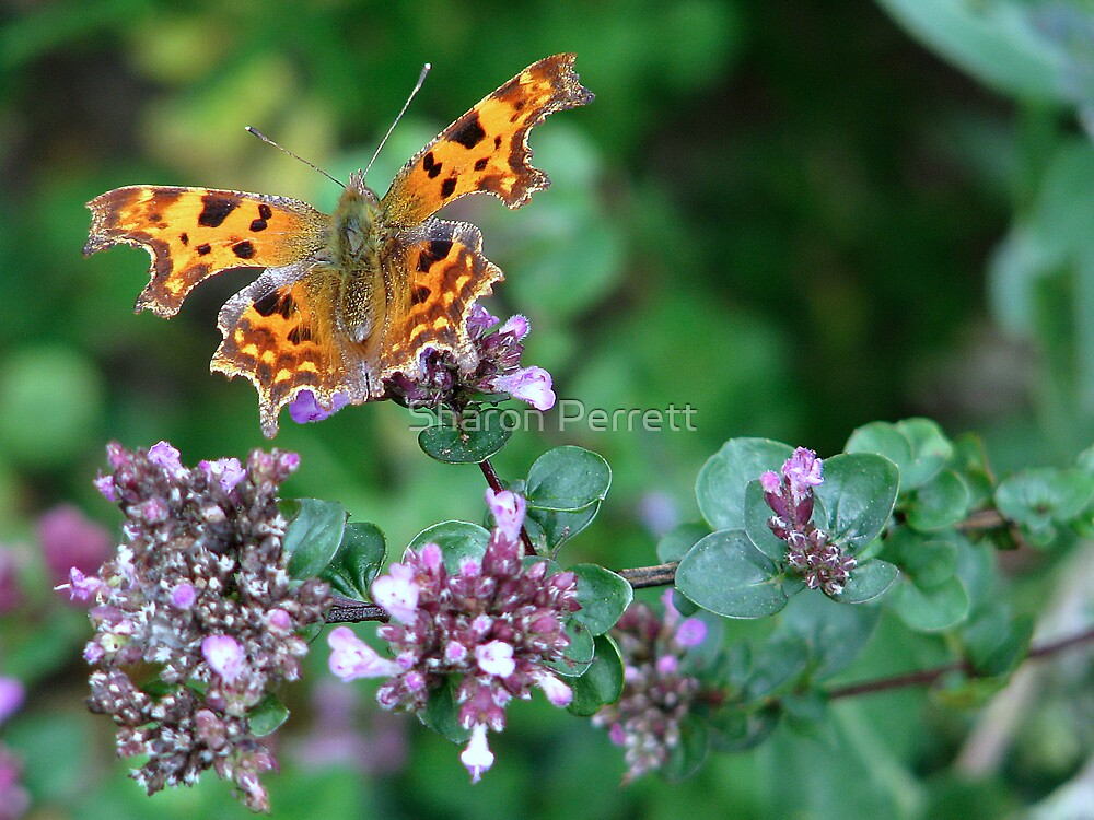 Yet another Comma by Sharon Perrett