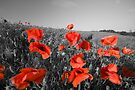 Colour pop the poppies by Paul Thompson Photography