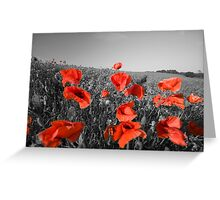 Colour pop the poppies Greeting Card