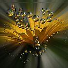 Bursting Bubbles by Christina Sauber