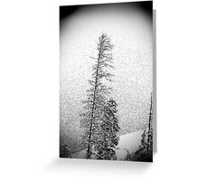 Black and White trees Greeting Card