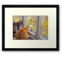 cats watch a squirrel Framed Print