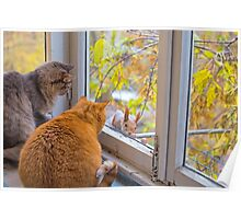 cats watch a squirrel Poster
