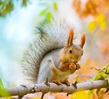Squirrel eating nut on the branch by Oksana Ariskina