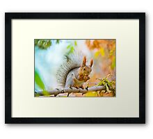 Squirrel eating nut on the branch Framed Print
