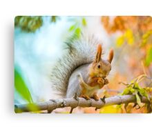 Squirrel eating nut on the branch Canvas Print