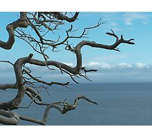 Ocean Branches Photographic Print