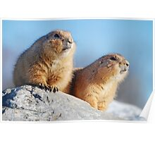 prairie dogs in the outlook Poster