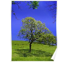 The lonely Tree, Costa Rica Poster