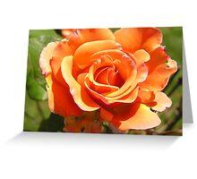 BIG BEAUTIFUL APRICOT ROSE  Greeting Card