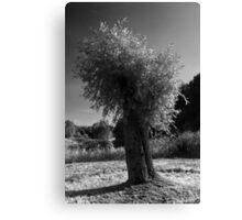Pollard Willow  Canvas Print