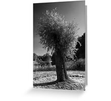 Pollard Willow  Greeting Card