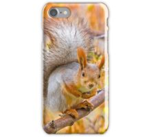 Red euroasian squirrel on the maple branch iPhone Case/Skin