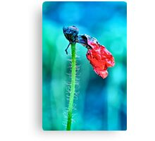 faded poppy flower hanging on the stalk Canvas Print