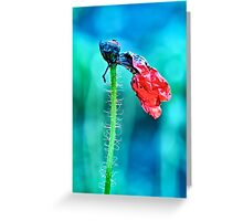 faded poppy flower hanging on the stalk Greeting Card