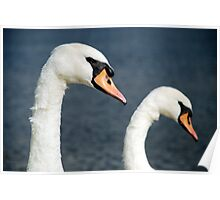 The twin Swans Poster