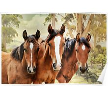 The yearlings Poster