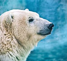 Polar bear closeup head shot by Oksana Ariskina