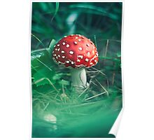 red stipe mushroom on the forest Poster