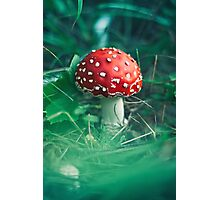red stipe mushroom on the forest Photographic Print