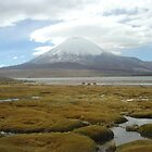Vicuñas in Lauca National Park, Chile by mojgan