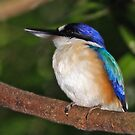 Forest Kingfisher  by Robert Elliott