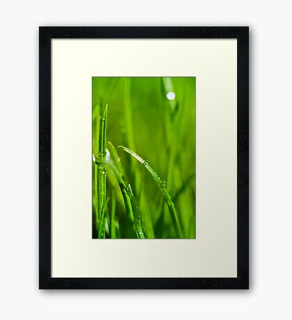 Water drops on the green grass background Framed Print