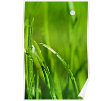 Water drops on the green grass background Poster