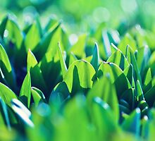 Natural green background with selective focus under the sun by Oksana Ariskina