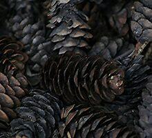 Pine Cone Macro by Stephen Thomas