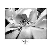 """Intrique"" Rose Photographic Print"