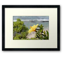 Yellow Blossom Framed Print