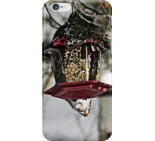 Acrobatic Squirrel Antics iPhone Case/Skin