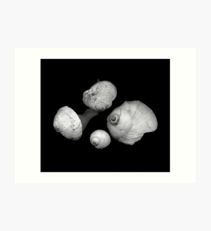 Four Shells Art Print