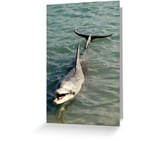Monkey Mia Dolphin Greeting Card