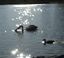 birds on the water by Rebecca Simmons
