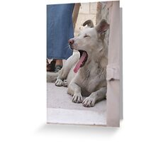 Dogs of Greece Greeting Card