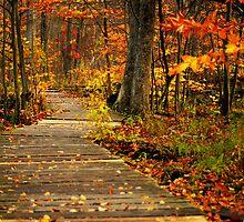 autumn lane II by Stefan Chirila