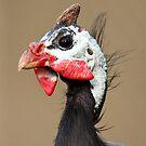 Guineafowl by margotk