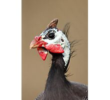 Guineafowl Photographic Print
